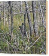 Bog Shell Wood Print