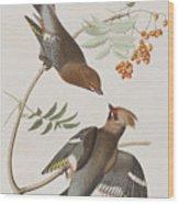 Bohemian Chatterer Wood Print