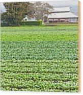 Bok Choy Field And Farm Wood Print