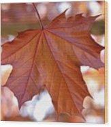 Bokeh Maple Wood Print