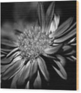 Bold Black And White Flower Wood Print