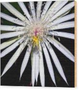 Bold Cactus Flower Wood Print