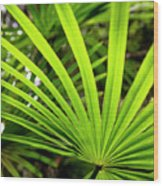 Bold Fronds 0 Wood Print