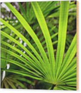Bold Fronds 1 Wood Print