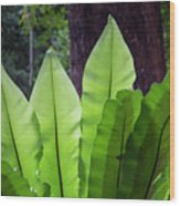 Bold Fronds 11 Wood Print