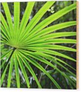 Bold Fronds 3 Wood Print