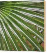 Bold Fronds 4 Wood Print