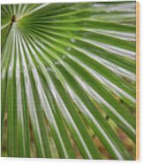 Bold Fronds 5 Wood Print
