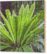 Bold Fronds 8 Wood Print