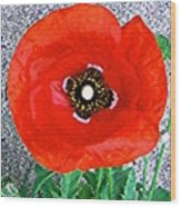 Bold Poppy Wood Print
