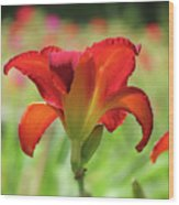 Bold Red - Daylily Wood Print