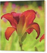 Bold Red Gold - Daylily Wood Print