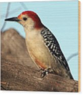 Bold Woodpecker Wood Print
