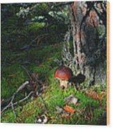 Boletus Mushroom Wood Print