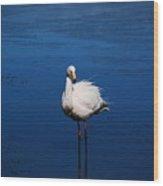 Bolivia Flamingos Wood Print