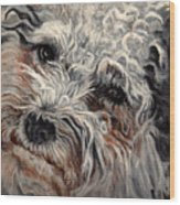 Bolognese Breed Wood Print