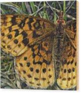 Boloria Bellona Wood Print