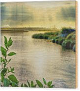 Bolsa Chica Bird Sanctuary Wood Print