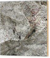 Bonaire Coral And Shells 1 Wood Print