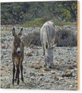 Bonaire Wild Donkeys 2 Wood Print