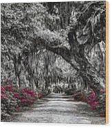 Bonaventure Cemetery Bw Wood Print
