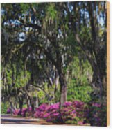 Bonaventure Cemetery IIi Wood Print