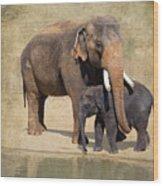 Bonding - Asian Elephants Houston Zoo Wood Print