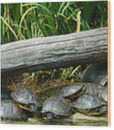 Bonding Box Turtles Wood Print