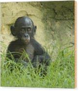 Bonobo Tyke Wood Print