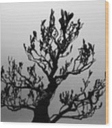 Bonsai Black And White Wood Print