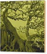 Bonsai Wood Print