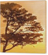 Bonsai Pine Sunrise Wood Print