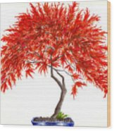 Bonsai Tree - Inaba Shidare Wood Print