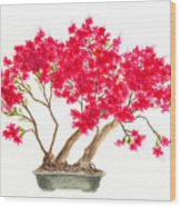 Bonsai Tree - Kurume Azalea Wood Print