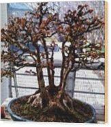 Bonsia Tree Garden Wood Print
