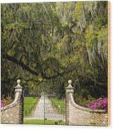 Boone Hall Plantation Wood Print