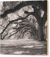Boone Hall Plantation Live Oaks Wood Print