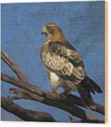 Booted Eagle Wood Print