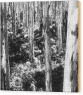 Boranup Ghosts Wood Print