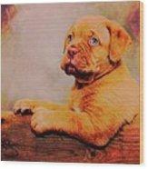 Bordeaux Mastiff Pup Wood Print