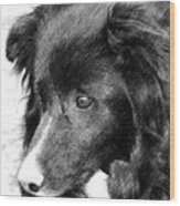 Border Collie In Pencil Wood Print by Smilin Eyes  Treasures