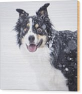 Border Collie In The Snow Wood Print