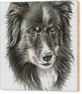 Border Collie Portrait Wood Print