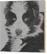 Surprised Border Collie Puppy Wood Print