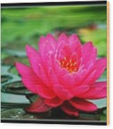 Bordered Water Lily Wood Print