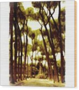 Borgasi Walk 5a Wood Print