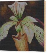 Borneo Orchid P Lebaudyanum Wood Print