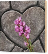 Boronia Love Wood Print