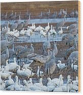 Bosque Cranes And Geese Wood Print
