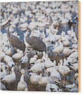 Bosque Waterfowl Mix Wood Print
